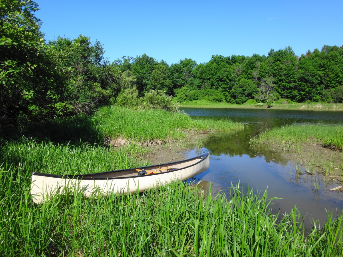 A white canoe rests on the shoreline of a small creek where it enters the Mississippi River. Lush, green vegetation covers the shore.