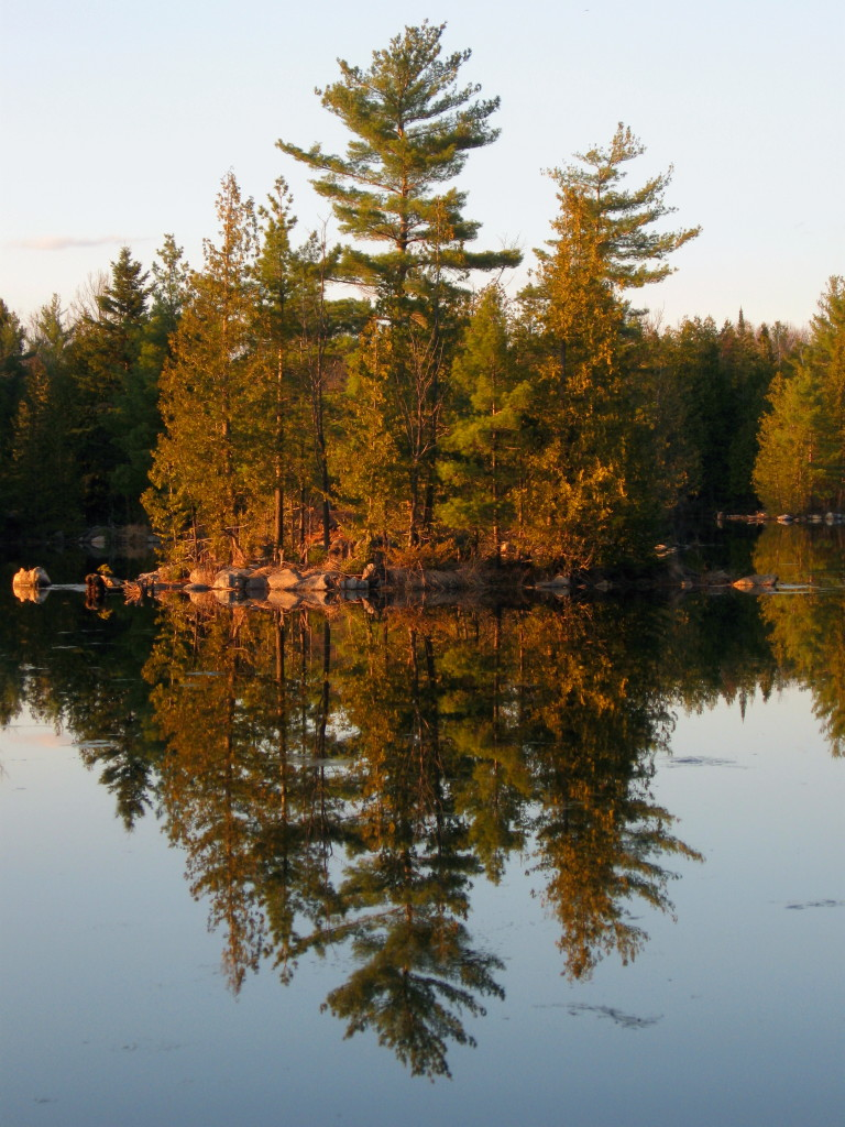 A stand of pine trees, glowing in the early evening sun, reflect in the perfectly still water at Morris Island Conservation Area.