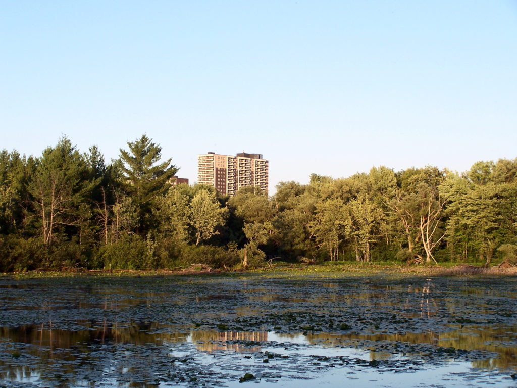 A single tower rises beyond Mud Lake and a line of trees.