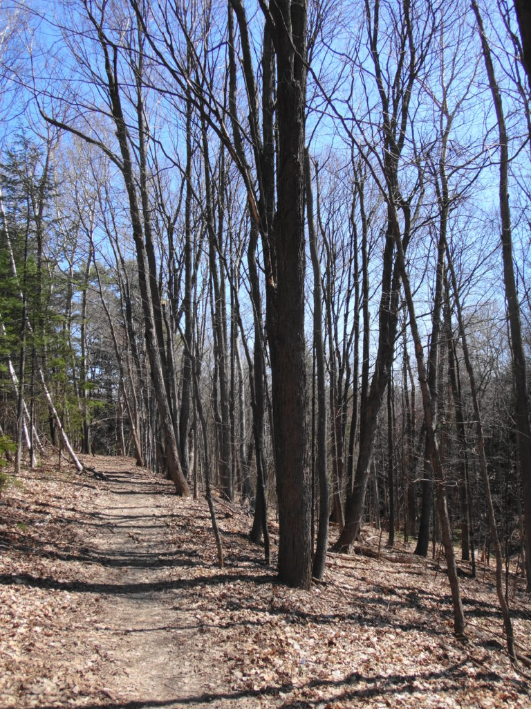 A trail leads through some trees down into the forest.