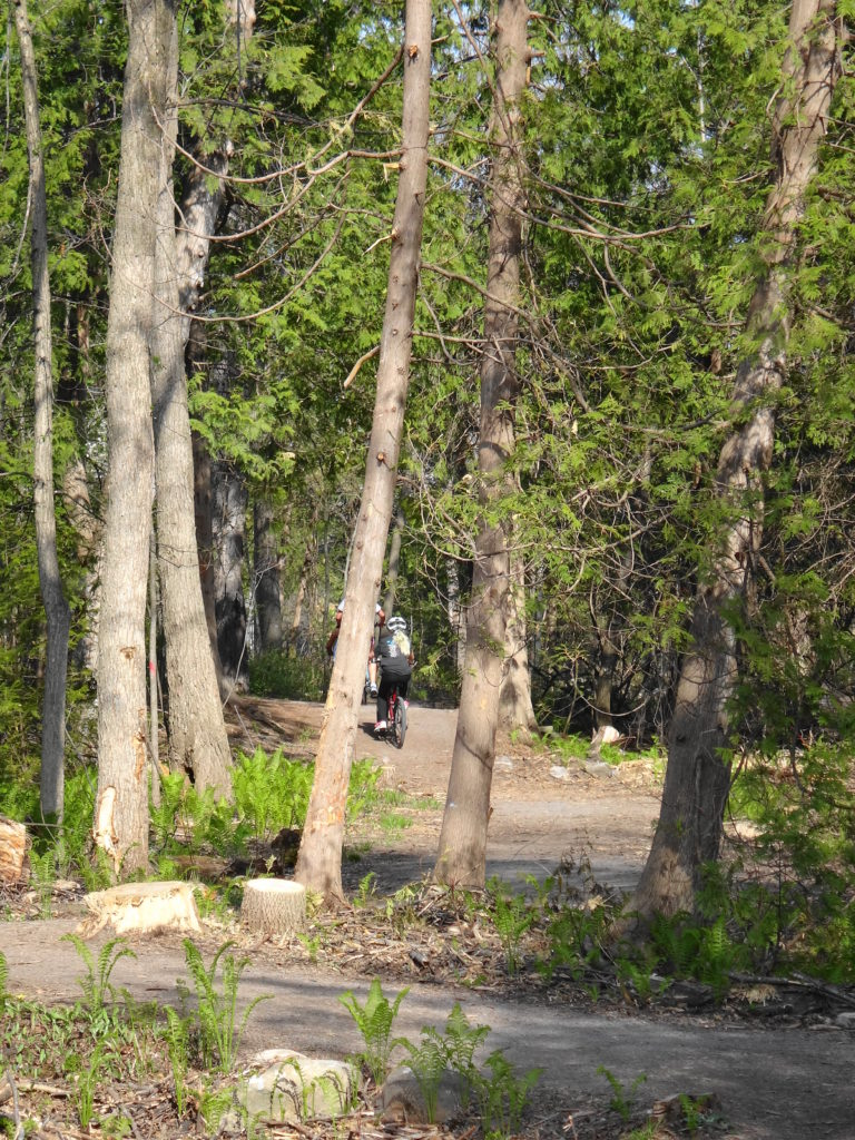 Children ride their bicycles along Poole Creek. The stumps of ash trees are visible in the foreground.