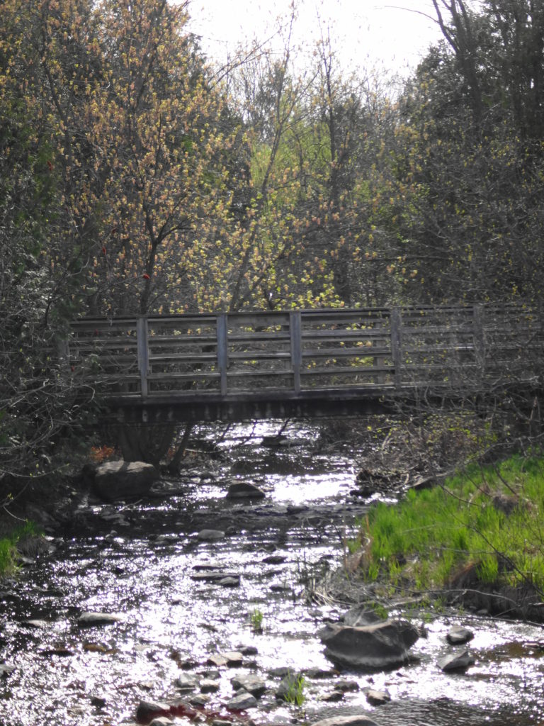 A wooden footbridge crosses Poole Creek over a stoney riffle. Sunlight sparkles on the water.