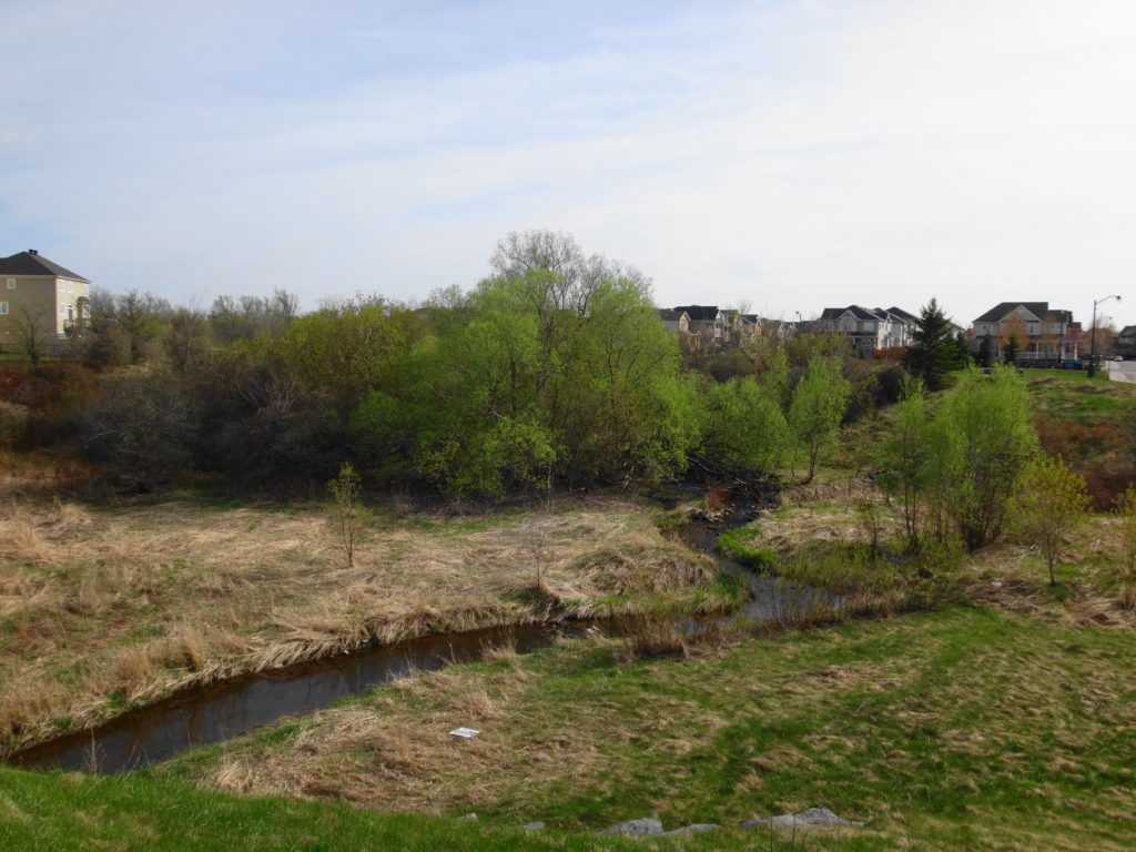 Lower Poole Creek winds through a partially-wooded valley, with houses in the background.