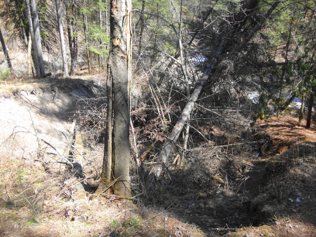 About 20 metres of the slope has slumped toward Bilberry Creek, carrying trees with it.