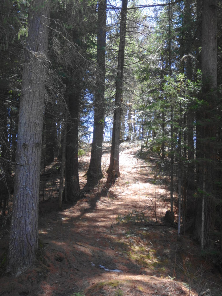 A nature trail leads up through conifers into sunlight.