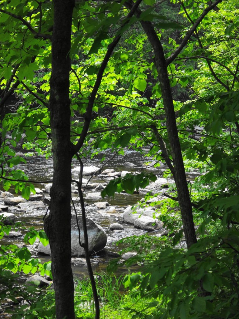 A view of the Jock River through the foliage in Heart's Desire.