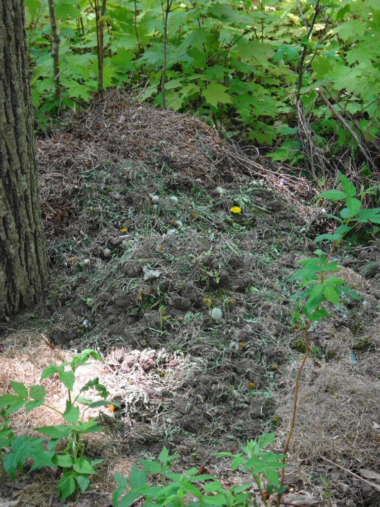 A pile of grass clippings and other yard waste smothers the native plants in Champman Mills East.
