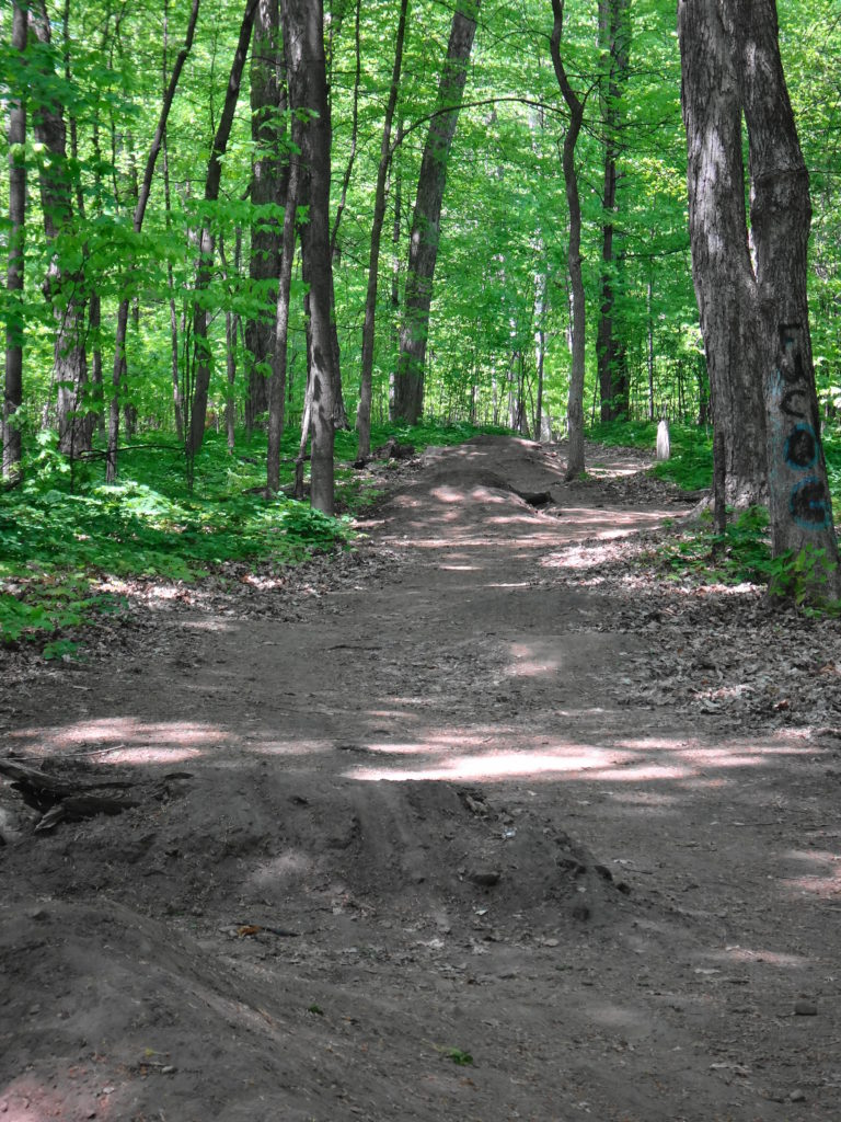 A wide, dirt mountain bike track cuts through the middle of the Chapman Mills East Woodlot.
