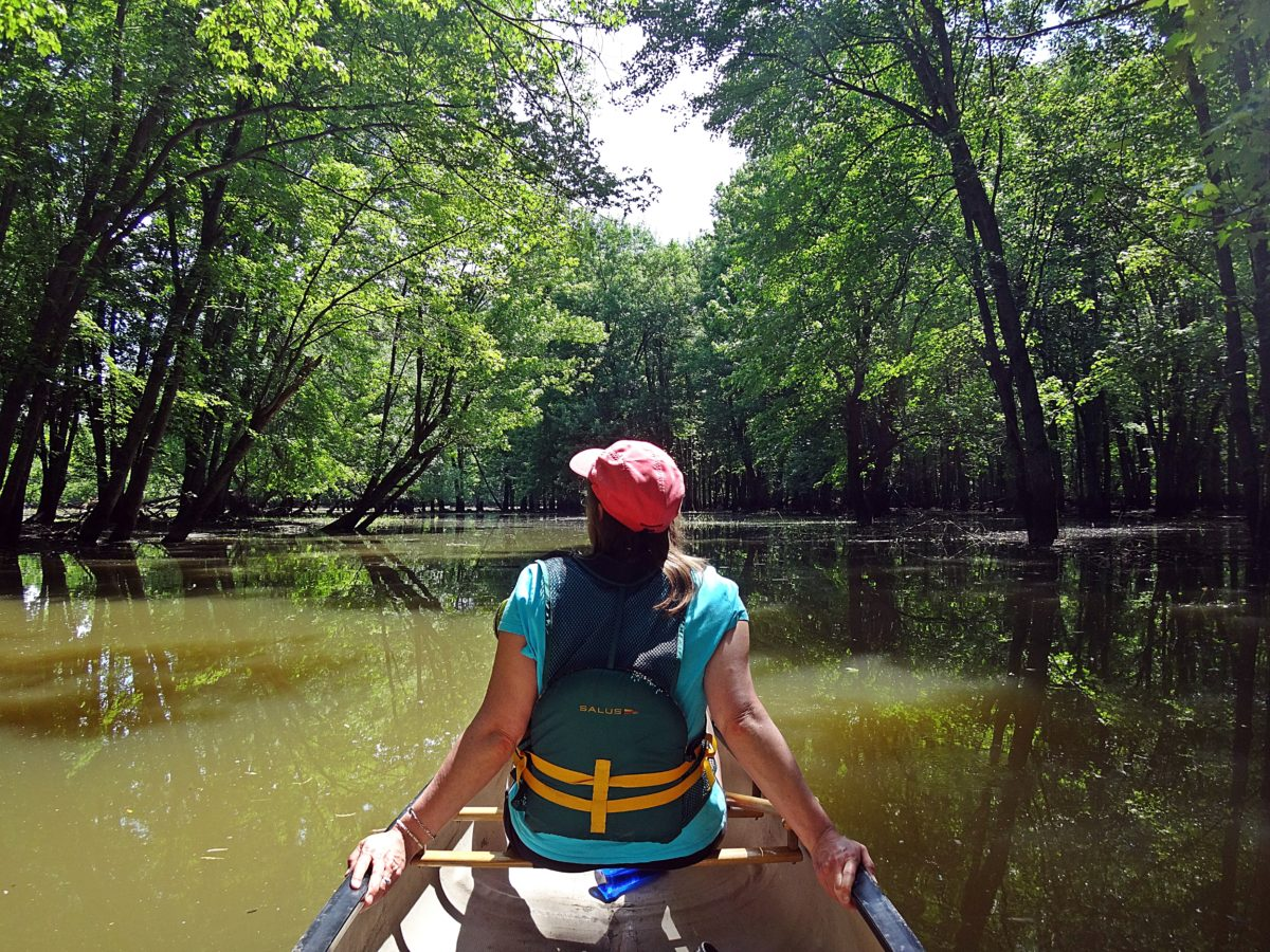 A woman leans back in the front of a canoe as it glides under arching trees in a flooded silver maples swamp.
