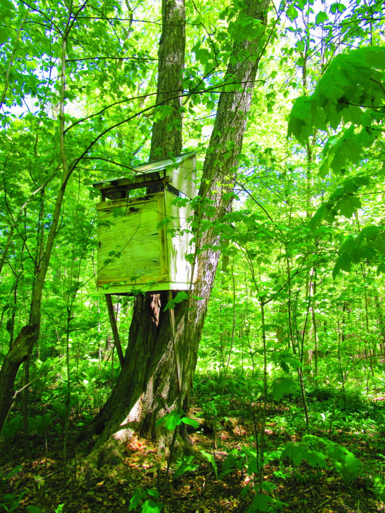 A small tree fort perches above the forest floor.