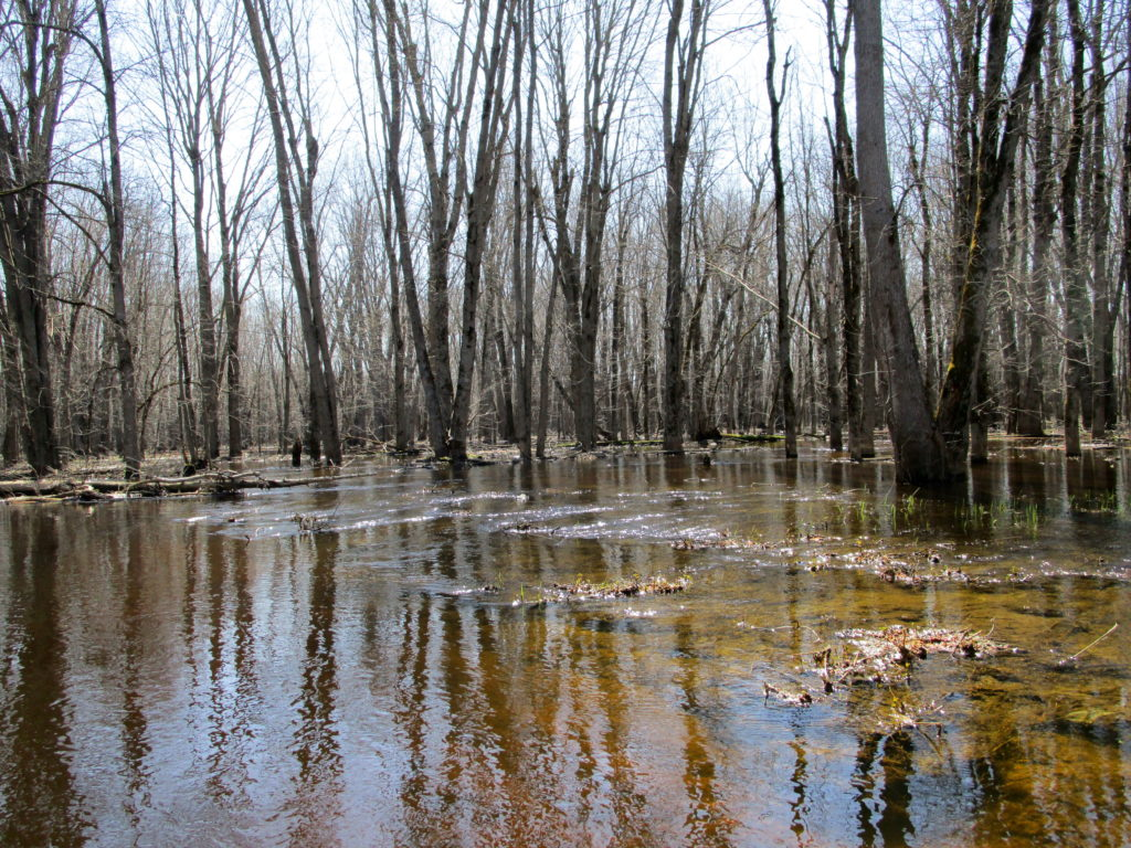 Floodwaters flow out of the channel of the Jock River into a flooded swamp.