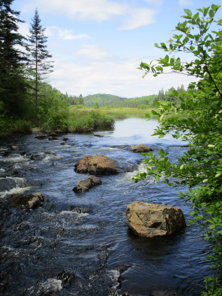 The south branch of the Madawaska River bubbles over rocky shallows.